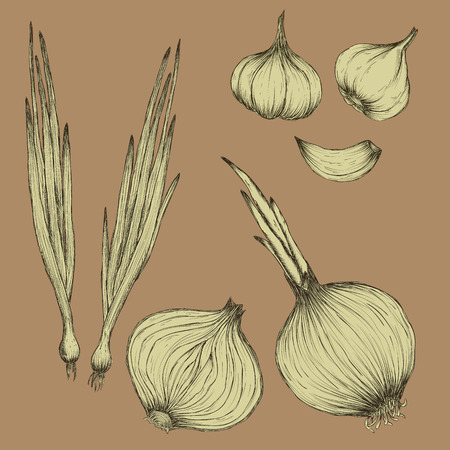 unpeeled: onions bulbs and garlic in white on beige background. vector Illustration