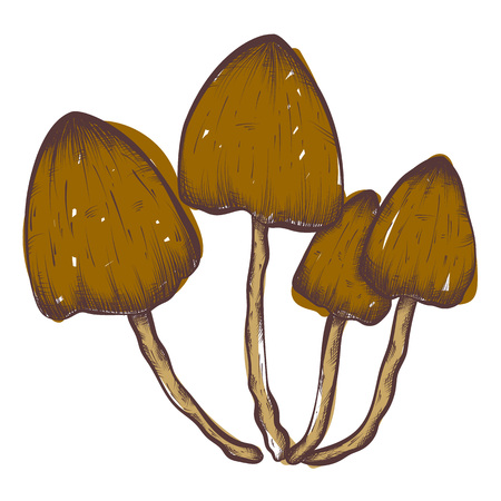 morel: Compilation of vector illustrations of mushrooms collected in the forest