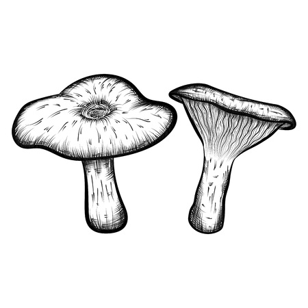 naturally: Compilation of vector illustrations of mushrooms collected in the forest