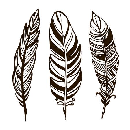 Hand drawn feathers. ink illustration art elements, boho design.