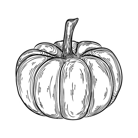 Autumn pumpkin outline hand drawn illustration. graphic icon linear drawing.
