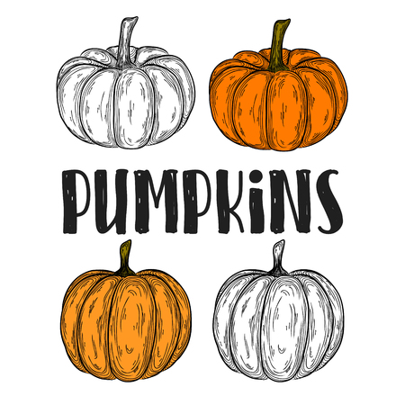 autumn pumpkin colorful hand drawn illustration. icon linear vegetable drawing.