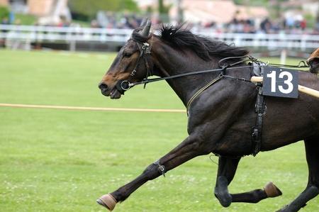 corse di cavalli: Una corsa di giramondo