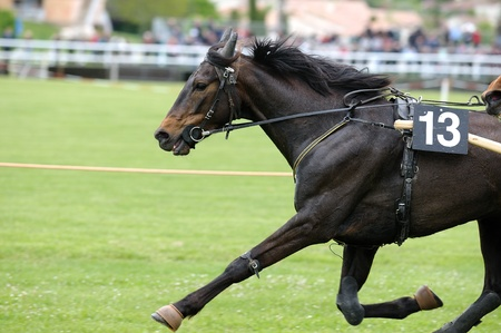 carreras de caballos: Una ejecuci�n de cerdo