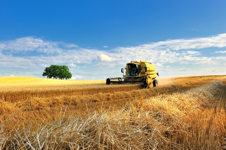 Harvest of grains in french. photo