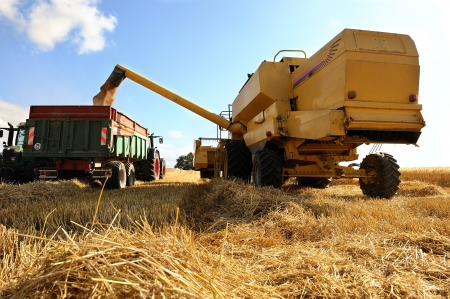 agricultural machine: wheat harvest in summer