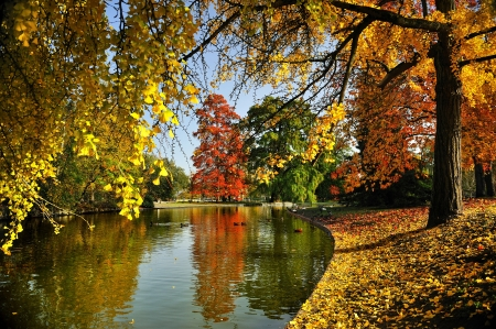 woodlands: A quiet place in autumn. Stock Photo