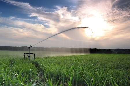 agriculture machinery: agricultural irrigation on a summer evening