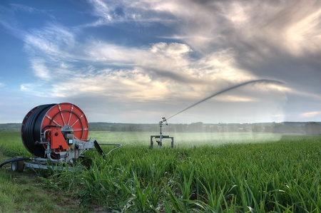 watered: agricultural irrigation on a summer evening      Stock Photo