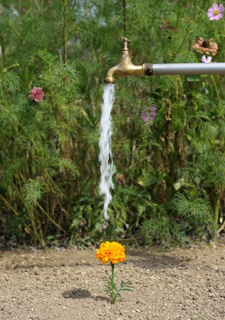 faucet water: watering flowers in garden