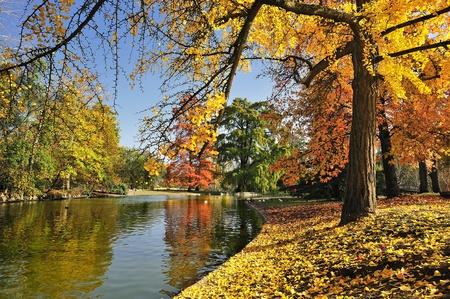 undergrowth: A quiet place in autumn