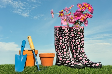 Gardening concept with flowers and wellington boots Stock Photo