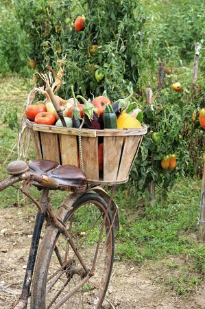 transporting: transporting the harvest of vegetables through a former bike
