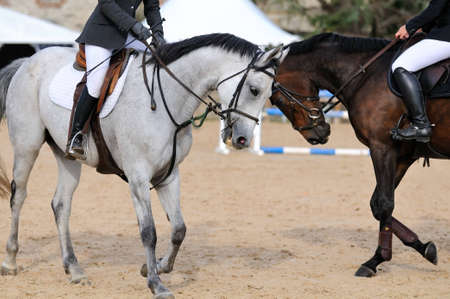 racehorses: twee renpaarden in training Stockfoto