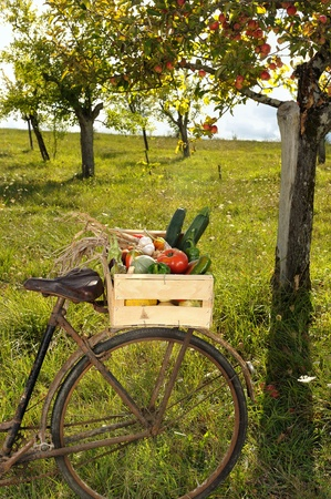 transporting the harvest of vegetables through a former bike
