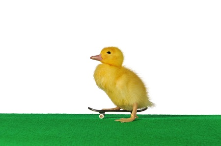 a duckling who exercised at skateboardding  photo