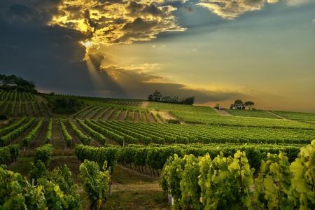 sunset over de wijngaarden van het zuiden van Frankrijk Stockfoto