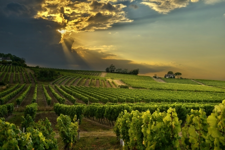 wineries: sunset over the vineyards of the South of France