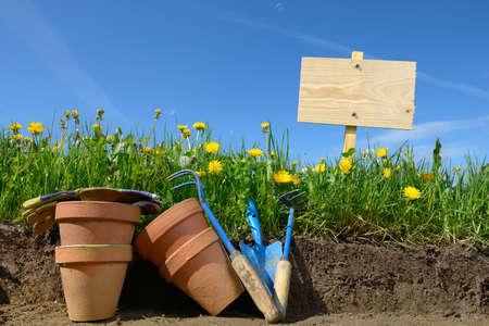 gardening in a field of dandelions photo