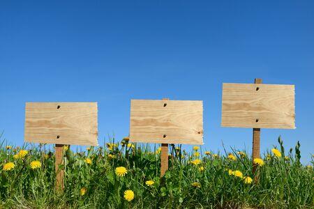 gardening in a field of dandelions Stock Photo - 19192414
