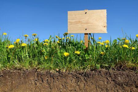 gardening, and field of dandelions photo