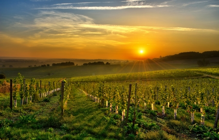 french countryside: sunrise over a vineyard in the south west of France, Bergerac  Stock Photo