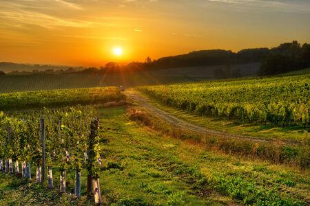 southwest: zonsopgang boven een wijngaard in het zuidwesten van Frankrijk, Bergerac Stockfoto