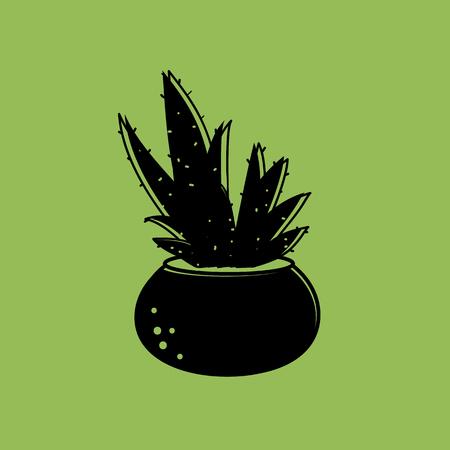 Aloe vera in the pot