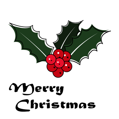 Christmas holly with berry. Vector illustration on white background