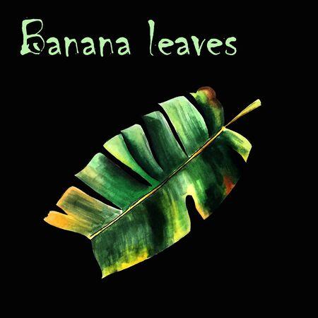 Banan leaves on black background. Hand draw illustration Banco de Imagens - 128747724