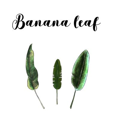 Set of banana leaves on white background. Hand draw illustration Banco de Imagens - 128747744