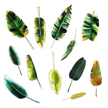 Set of banana leaves on white background. Hand draw illustration 写真素材