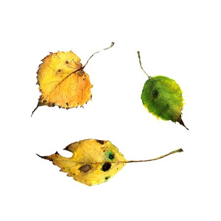 Set of autumn leaves on white background Watercolor illustration 写真素材