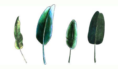 Banana leaves on white background. Marker illustration Banco de Imagens - 128747879