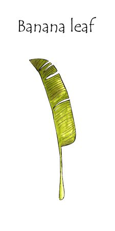 Banana leaf on white background Banco de Imagens - 128747885