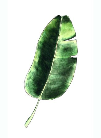 Banana leaf on white background Banco de Imagens - 128747880