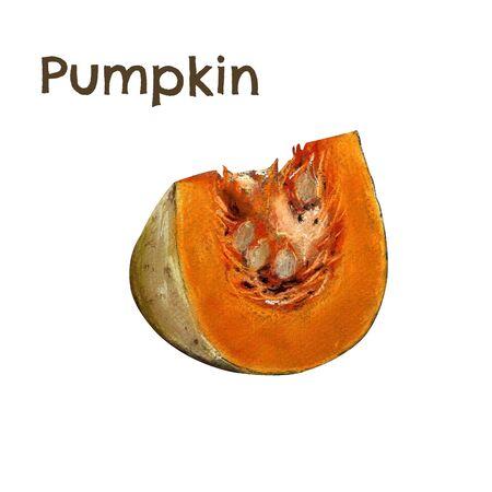 Pumpkin sliced piece. Illustration on white background. Hand draw