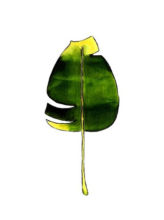 Banana leaf on white background Banco de Imagens - 128749084