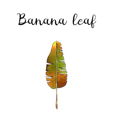 Banana leaf on white background Banco de Imagens - 128749083