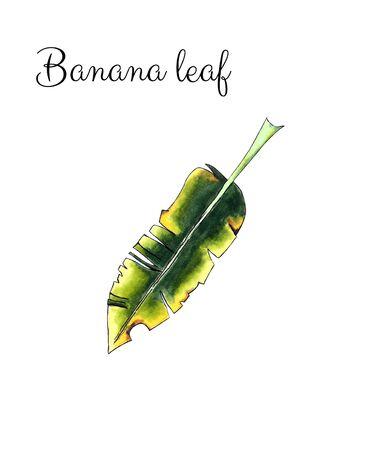Banana leaf on white background Banco de Imagens - 128749166