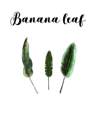 Banana leaves on white background Banco de Imagens - 128749168