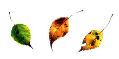 Set of autumn leaves. Watercolor illustration 写真素材