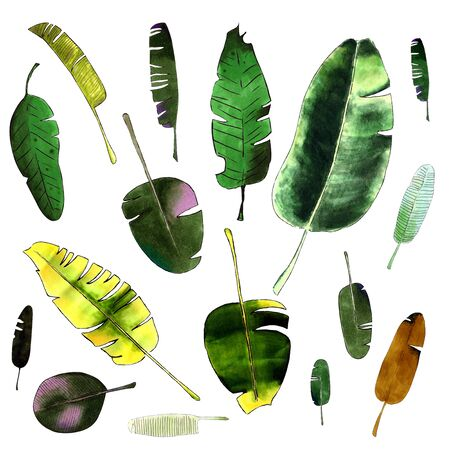 Banana leaves on white background. Markers drawing