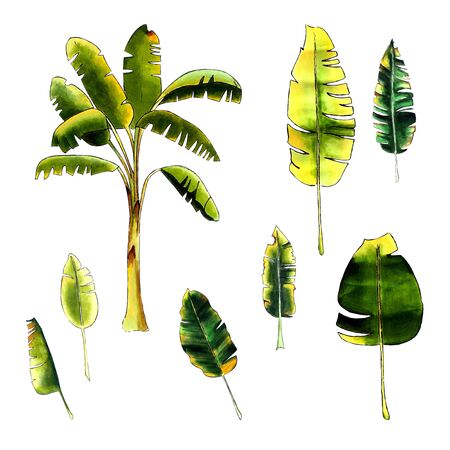 Banana set with leaves on a white background