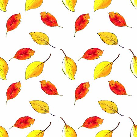 Seamless pattern with autumn leaves on white background Hand draw illustration.
