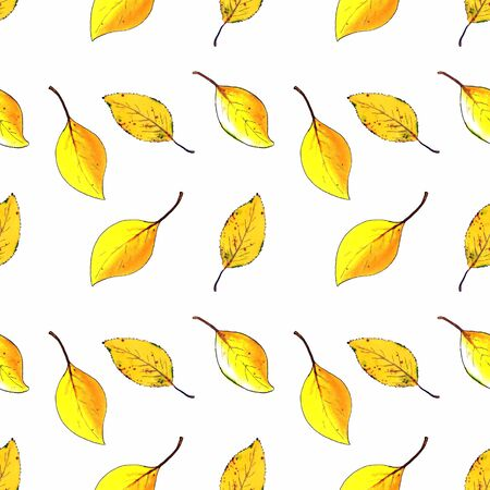 Seamless pattern with yellow autumn leaves on white background Hand draw illustration. Stok Fotoğraf