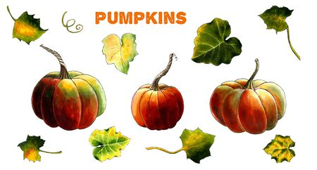 Set of pumpkins with leaves on white background Hand draw illustration
