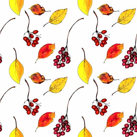 Seamless pattern with autumn leaves and berries on white background Hand draw illustration.