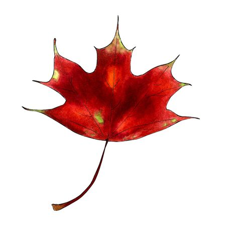 Maple leaf on white background Hand draw illustration Stok Fotoğraf