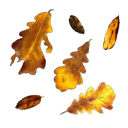 Autumn oak leaves on a white background. Hand draw illustration Stok Fotoğraf - 131717874